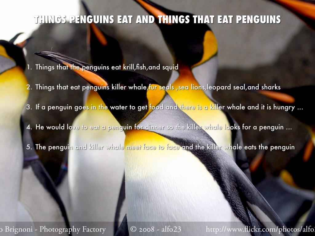 All About Penguins By Mikayla Jones by Jenny Jehnzen