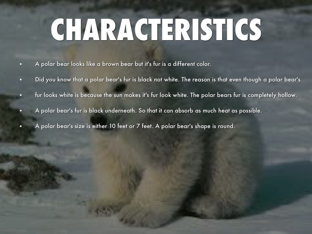 Fun Facts About Polar Bears by Anisha Gadre
