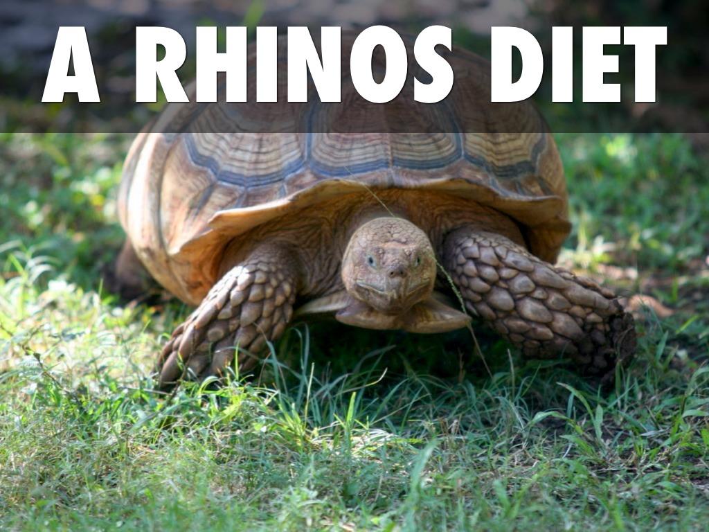 Rhinos by Kim Boehringer