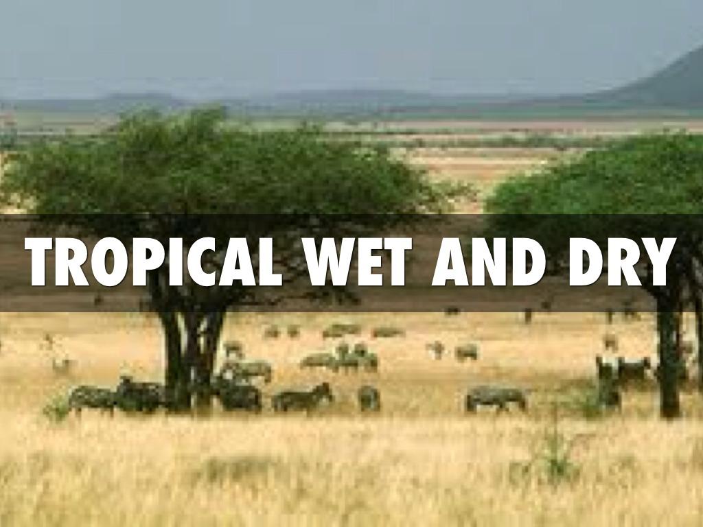 Clima tropicale bagnato e secco - Immagini Bing-2920