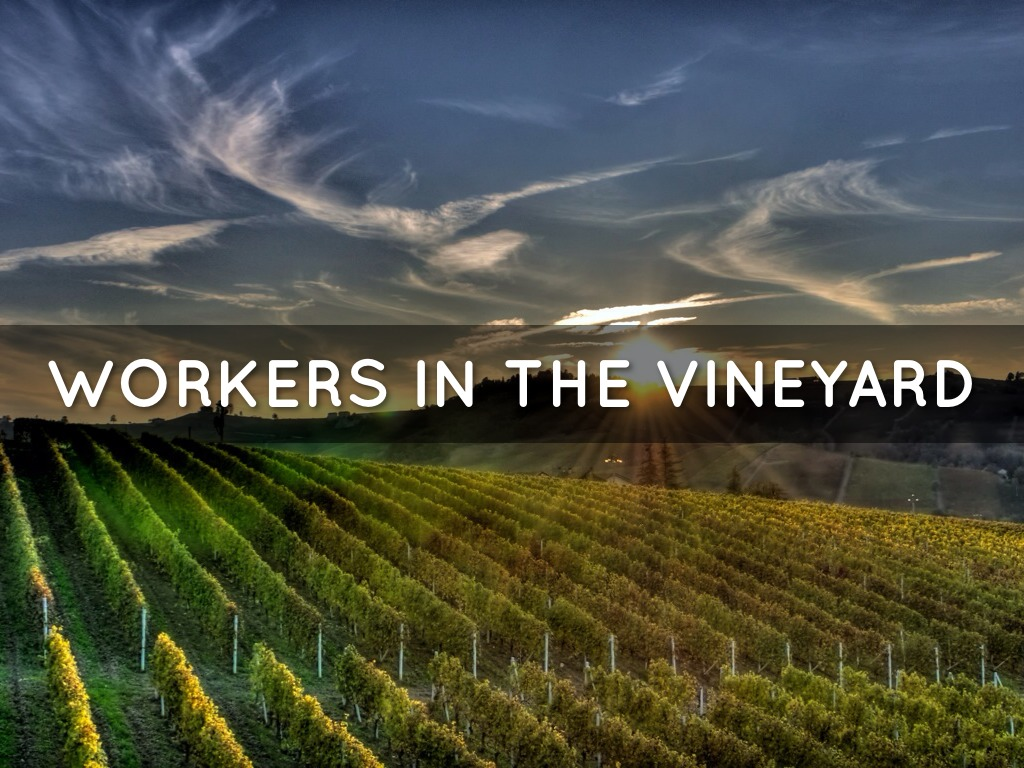 Veeyard Meaning: Workers In The Vineyard By Theresa.medina