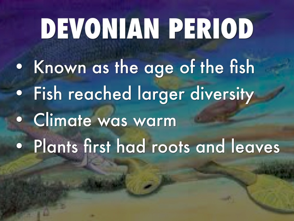 The Devonian period of the Paleozoic era: characteristics, major events, animals and plants 3
