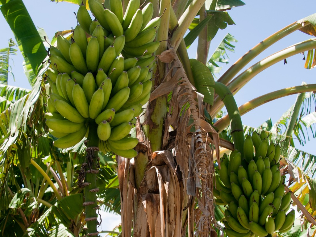 banana tree Please use our booking system to make a reservation for same day or last- minute bookings, please call the restaurant directly as we always leave tables for .