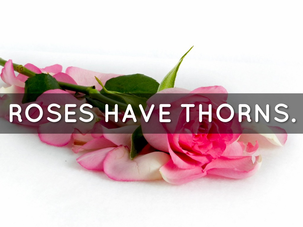 why roses have thorns Do knock out roses have thorns roses range greatly in size and appearance depending on the type they offer an appealing form and a pleasing fragrance but often have high maintenance requirements, insect and disease susceptibility and thorns.