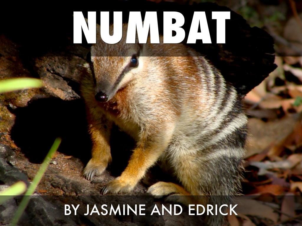 numbat report