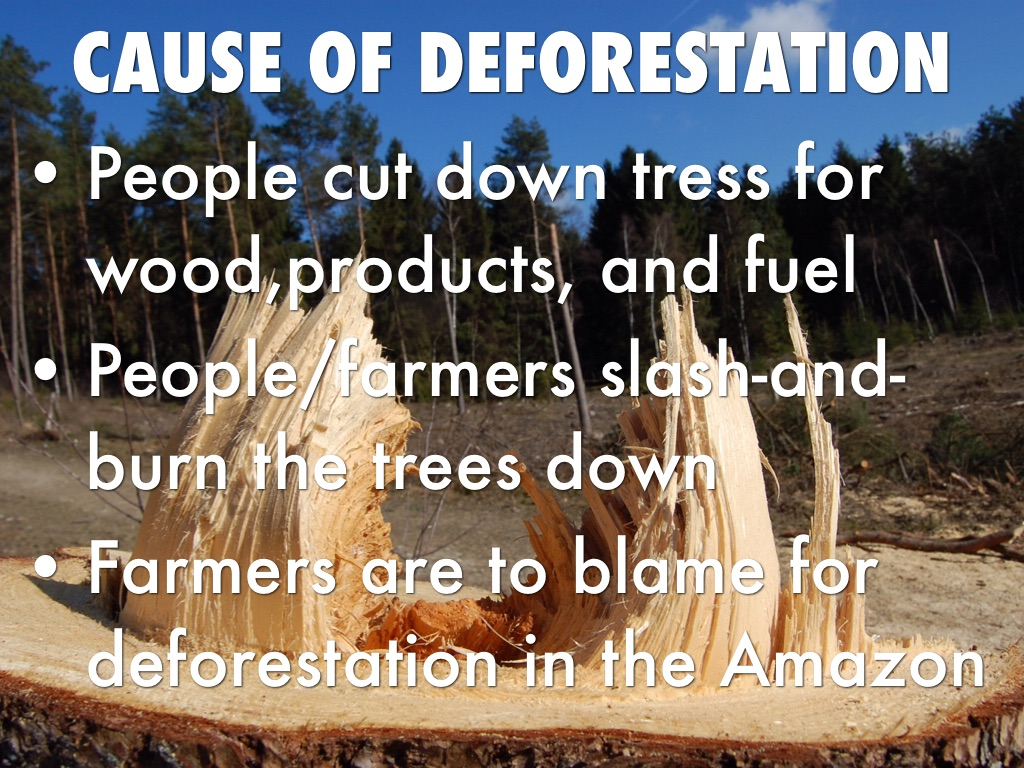 Deforestation by Mai Pa Chi Xiong