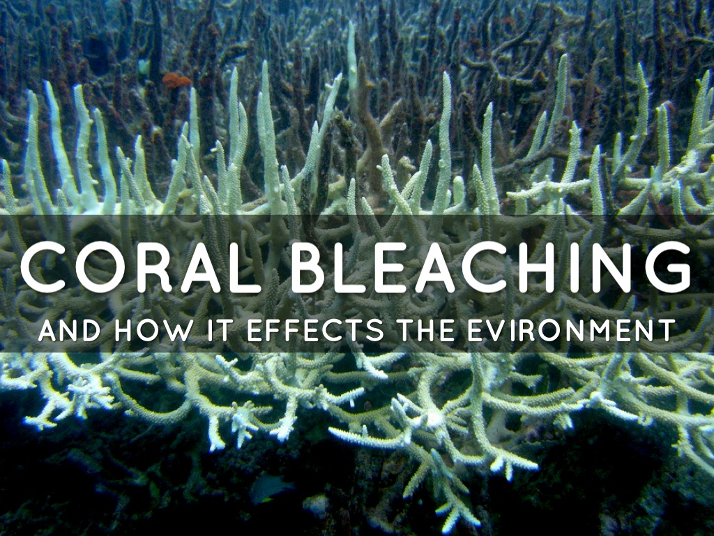 coral bleaching Tiny plant-like organisms called zooxanthellae live in the tissues of many animals, including some corals , anemones, and jellyfish , sponges.