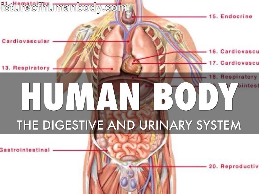 Urinary System by Jasmine Raldep