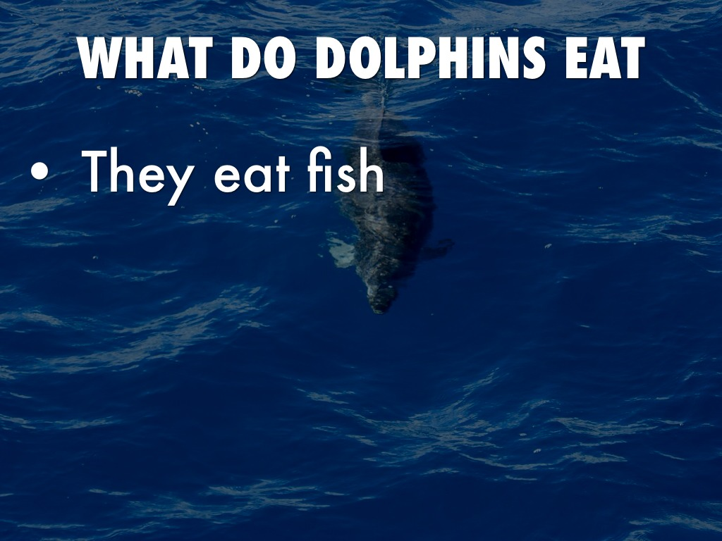 What do dolphins eat they eat fish by p209 for How do fish eat