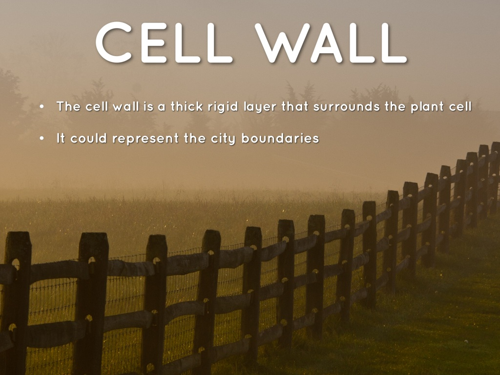 Cell As A City By Dean Cotrone