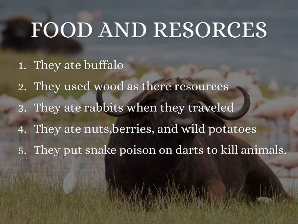 Comanche Facts by Kaili M