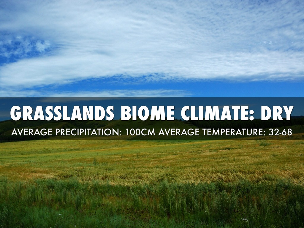 the grassland biome essay Biomes are the communities of the world 1031 words | 4 pages animals and plants acclimating to their environments you can classify biomes in many different ways, by their climate, their biodiversity, human activity, their animals and plants, and their habitats.