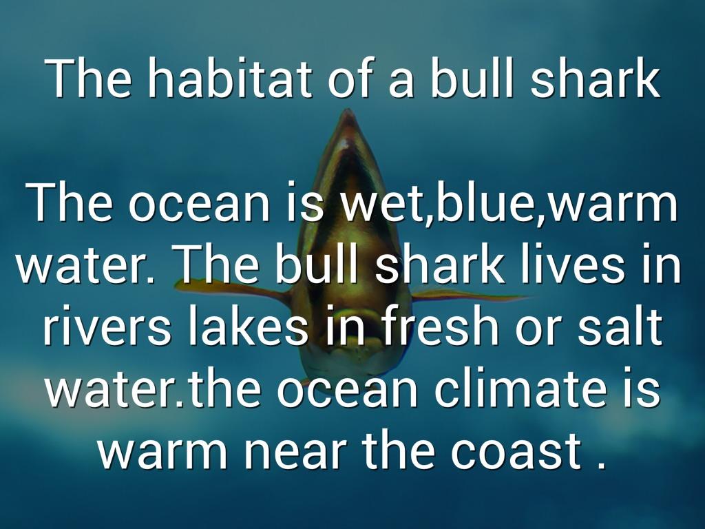 Bull Shark-chidi by Jenny Jehnzen