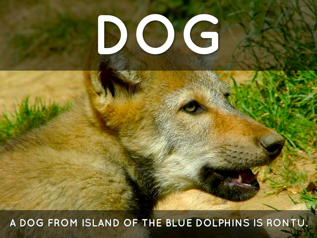 The Island Of The Blue Dolphins Rontu Island of the Blue Dol...