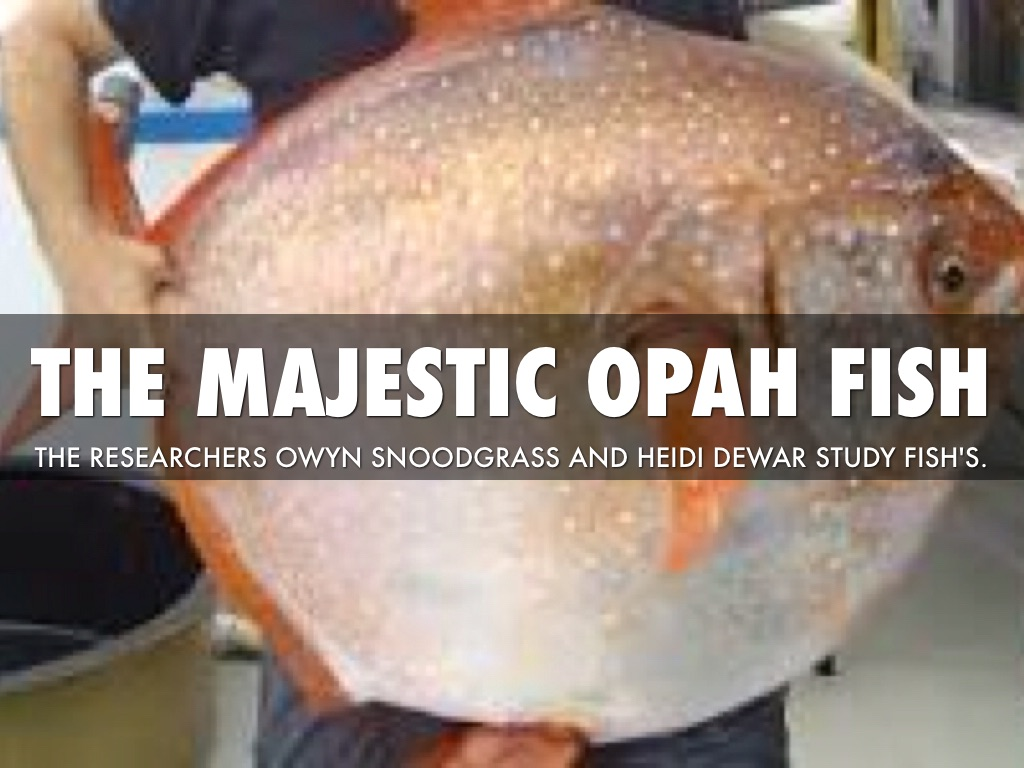 Wow:the First Warmblooded Fish