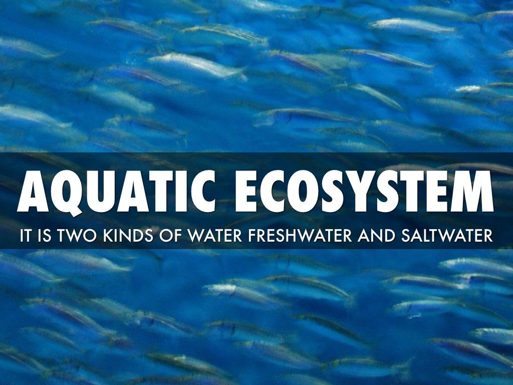 fresh water aquatic ecosystem