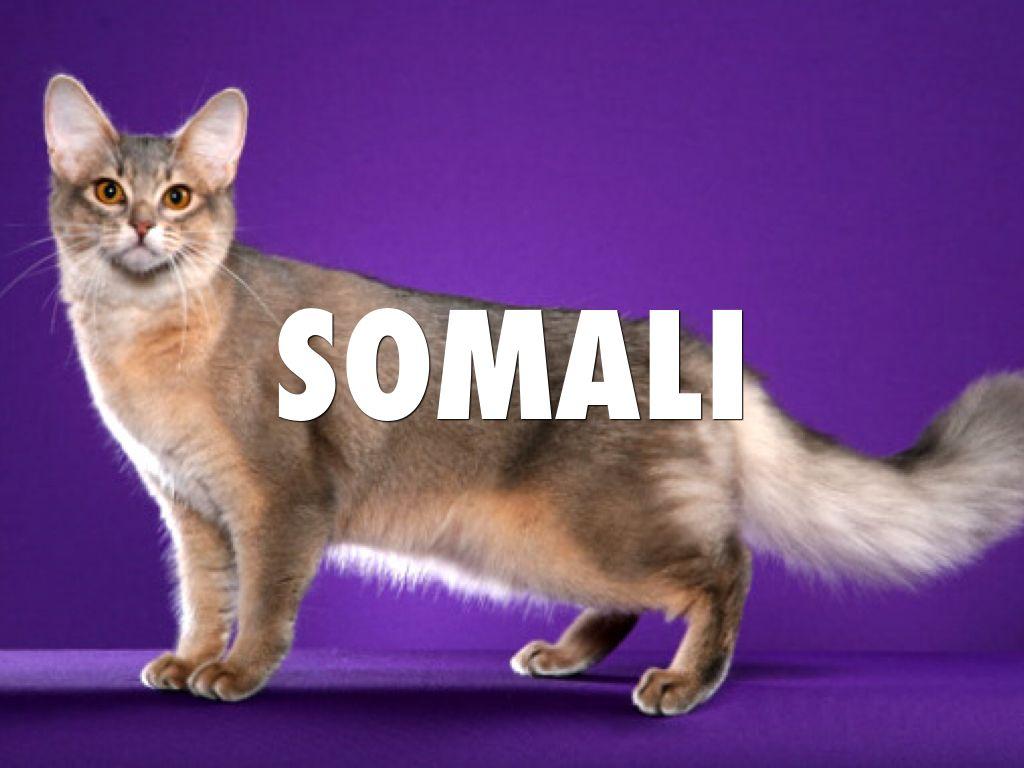 Copy of Somali