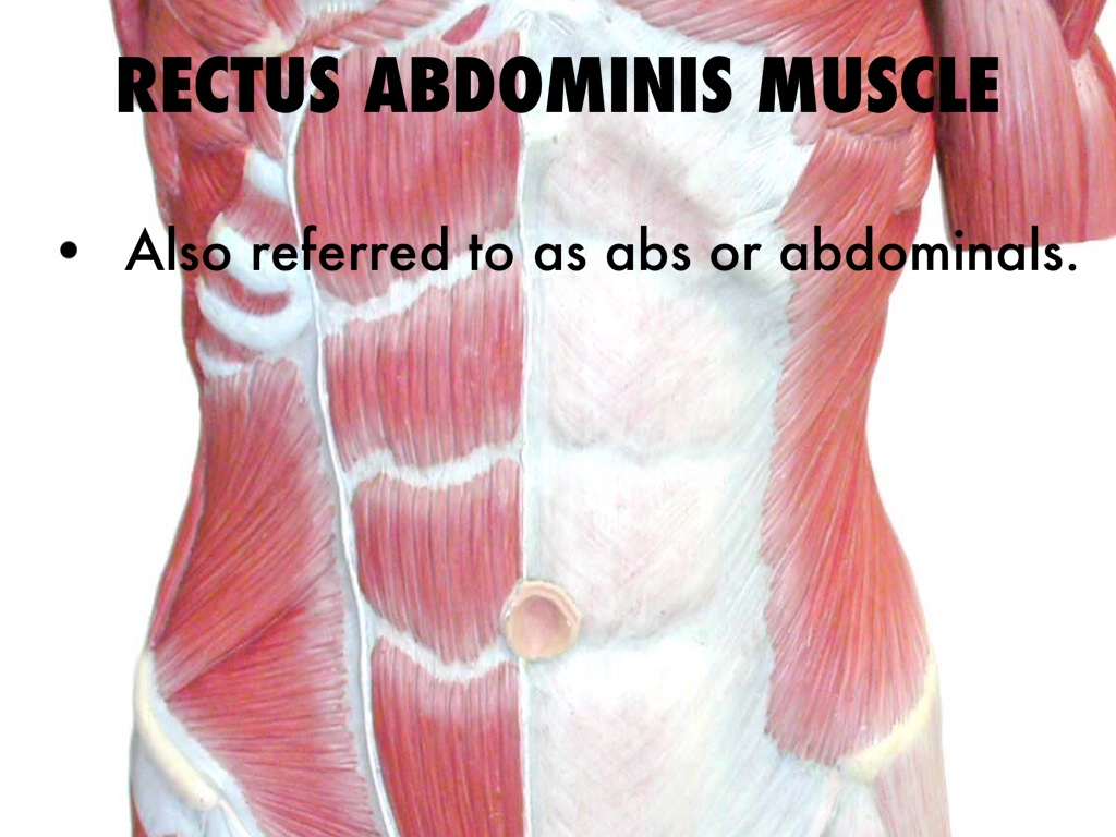 Rectus Abdominis by Claire Russell