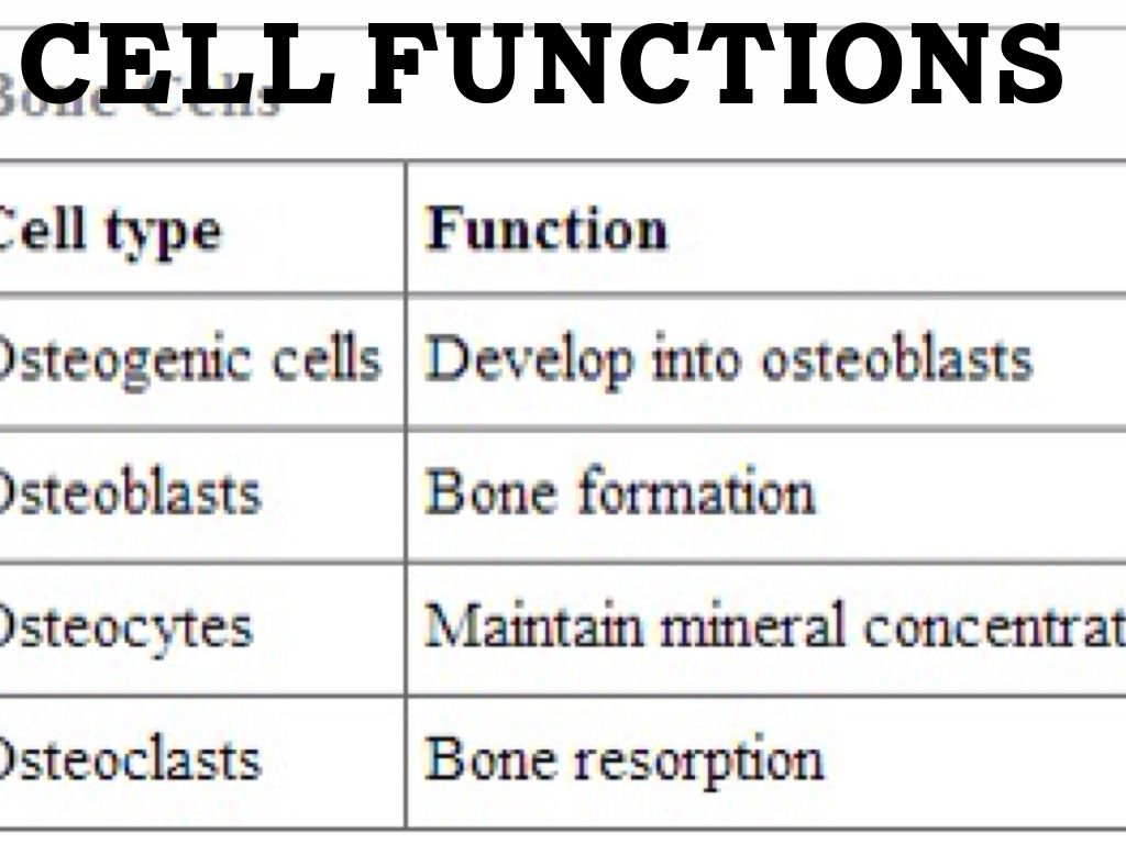 features and functions of cells Labbench activity how do guard cells function guard cells are cells surrounding each stoma they help to regulate the rate of transpiration by opening and closing.