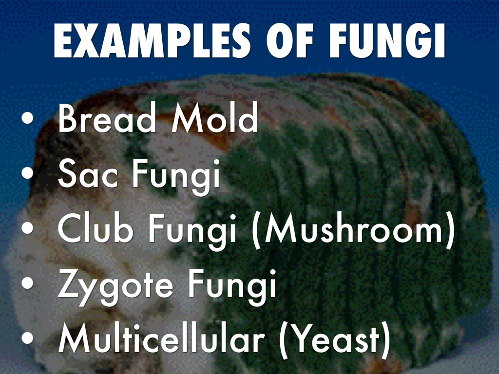 Fungi By Thomaszych