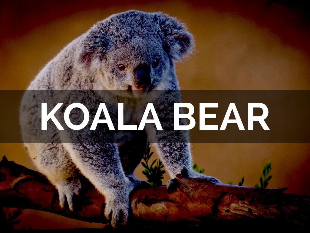 koala bear speech