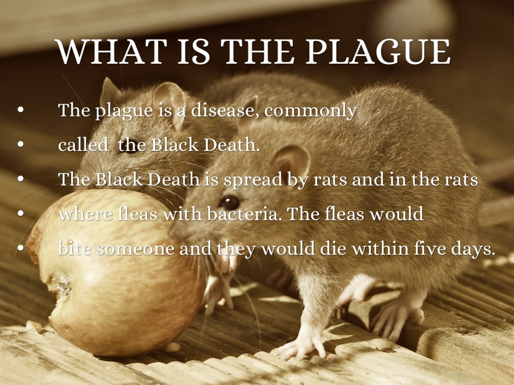 What is plague 51