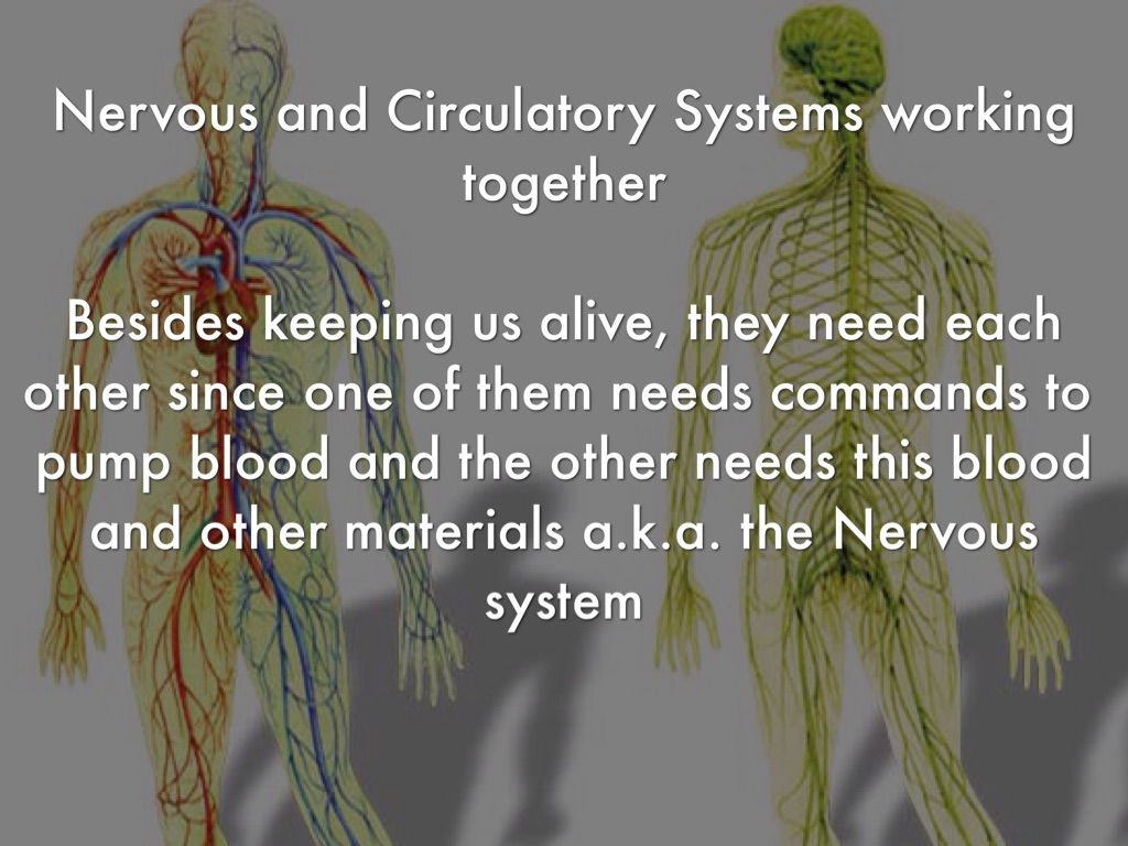 how does the nervous system work with other systems