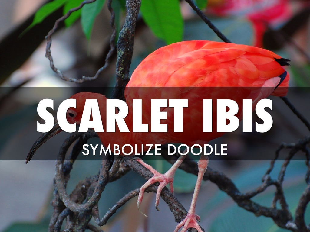 literary elements in the scarlet ibis The scarlet ibis was the first and only work of hurst's to achieve widespread recognition it quickly achieved the status of a classic, being reprinted in many high-school and college literature text books.