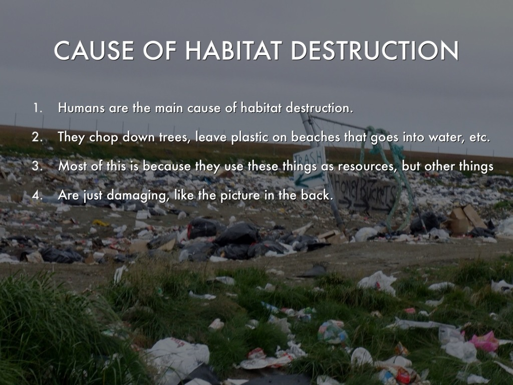 habitat destruction Habitat loss and fragmentation has become the biggest threat, along with poaching, to the continuing survival of the african elephant the main cause of the loss of the natural forest is pressure from human population growth.