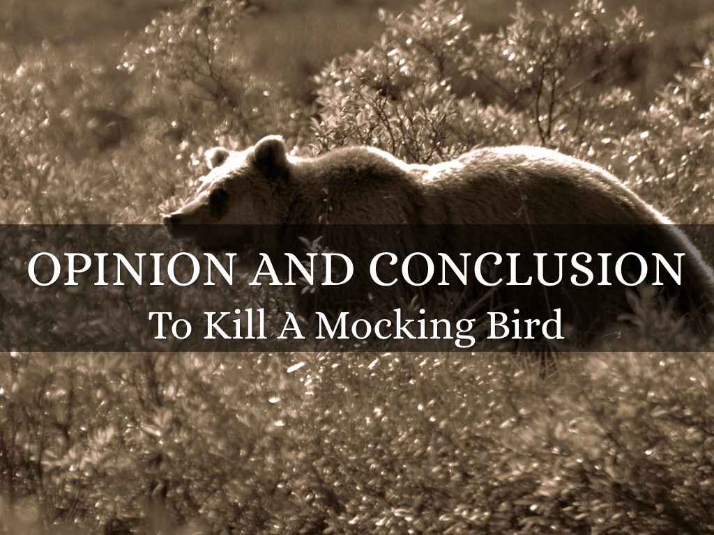 Opinion and Conclusion