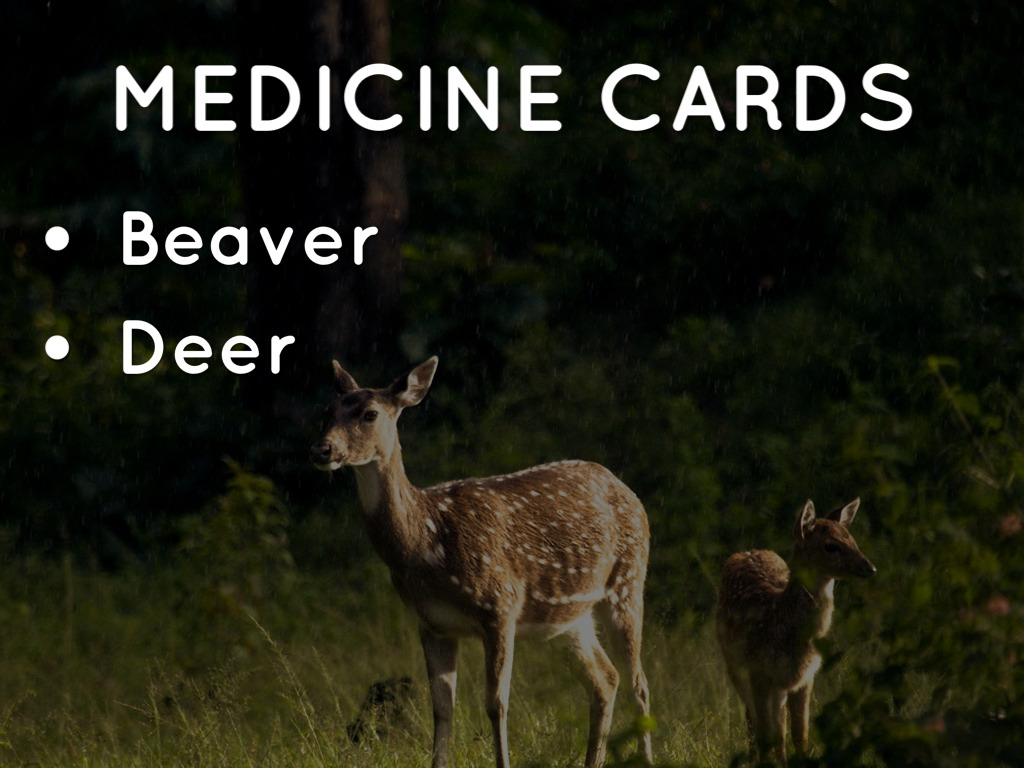 Medicine Animals