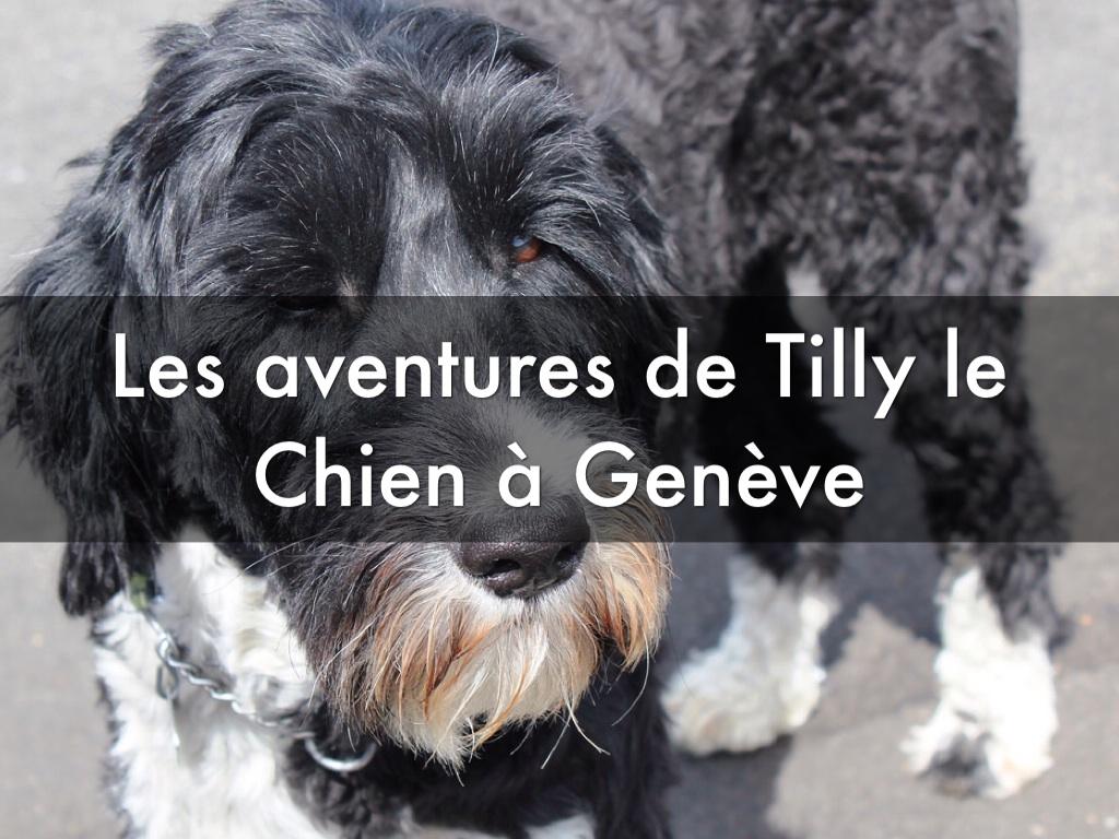 French 2 Animal Story