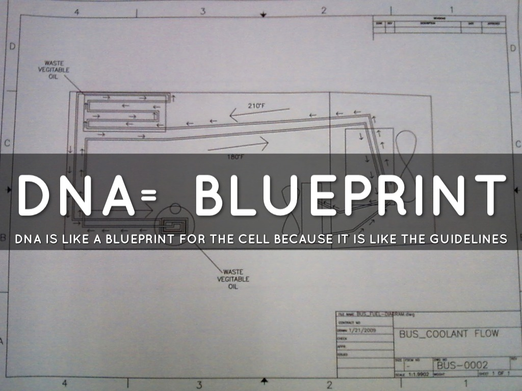 Cell analogies by hank hanson dna blueprint malvernweather Choice Image