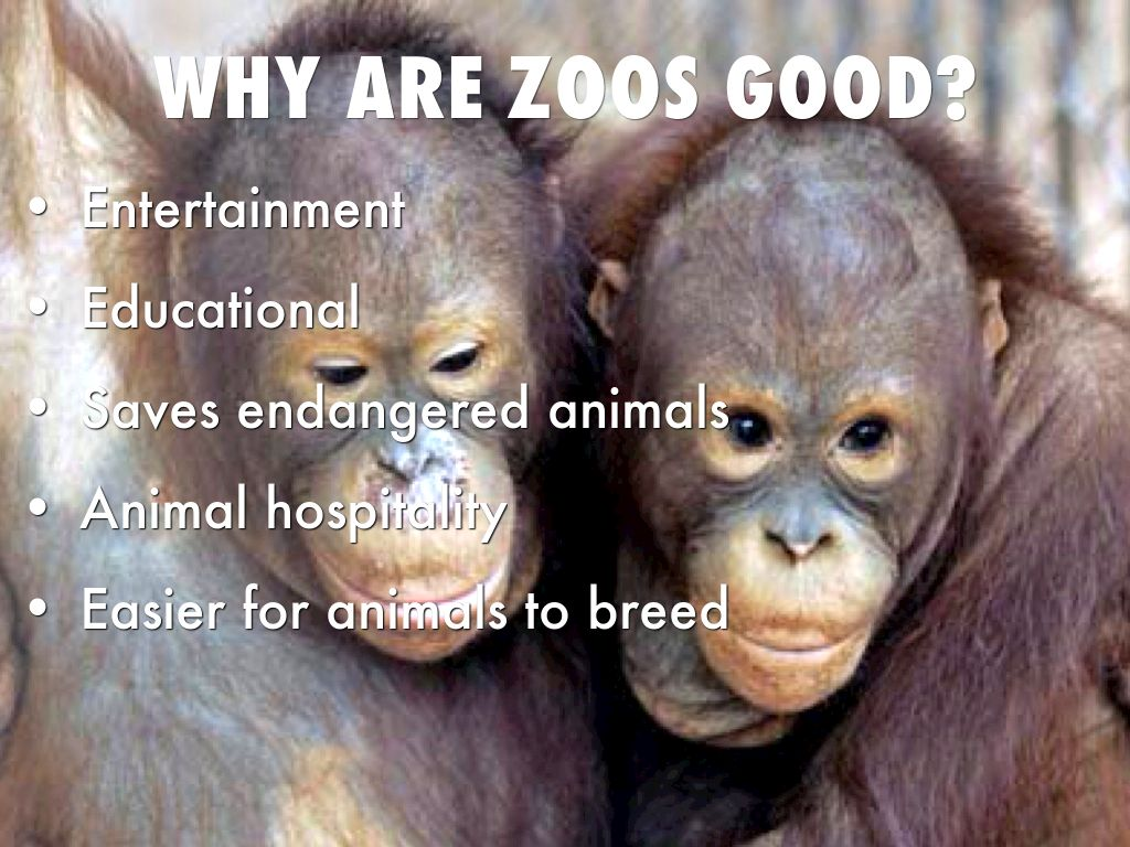 are zoos internment camps for animals essay 2014-7-18  31freshmen should not be required to purchase a meal plan from the college 32zoos are internment camps for animals and should be shut down 33university students.