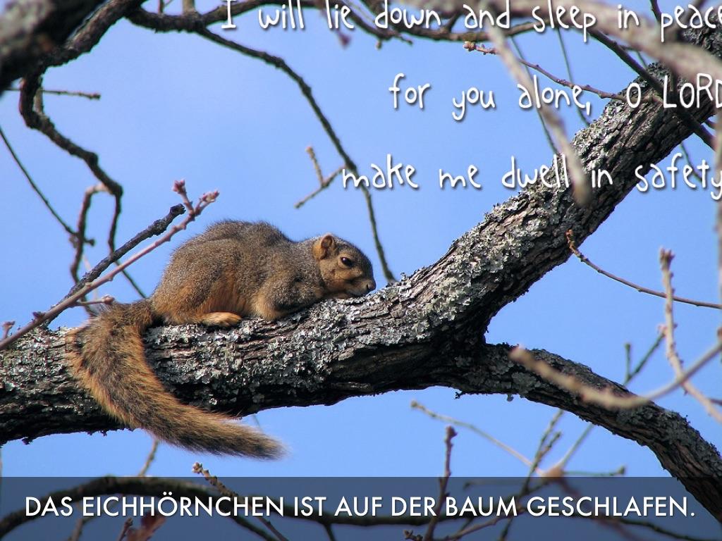 Fer Baum Und Das Eichhorn