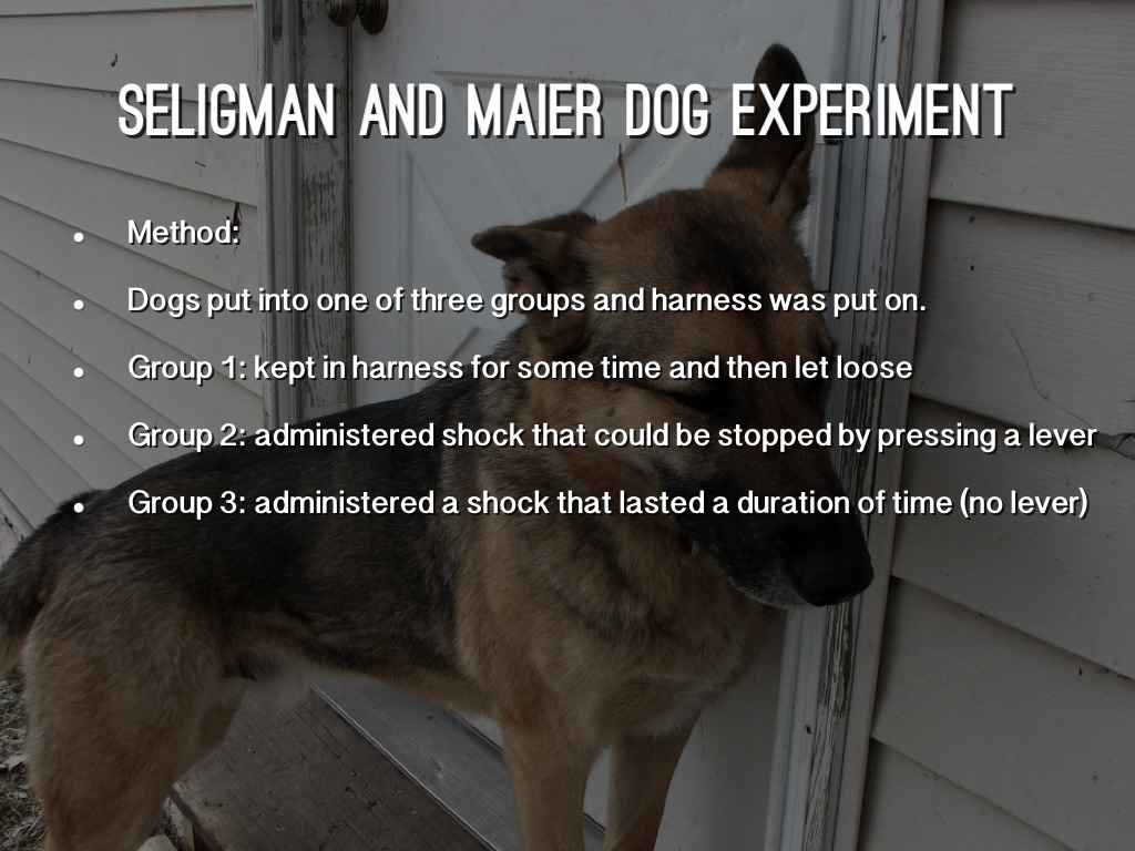 ALLEVIATION OF LEARNED HELPLESSNESS IN THE DOG