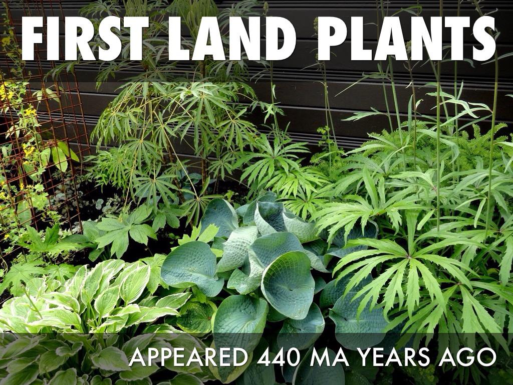 first land plants appear wwwimgkidcom the image kid