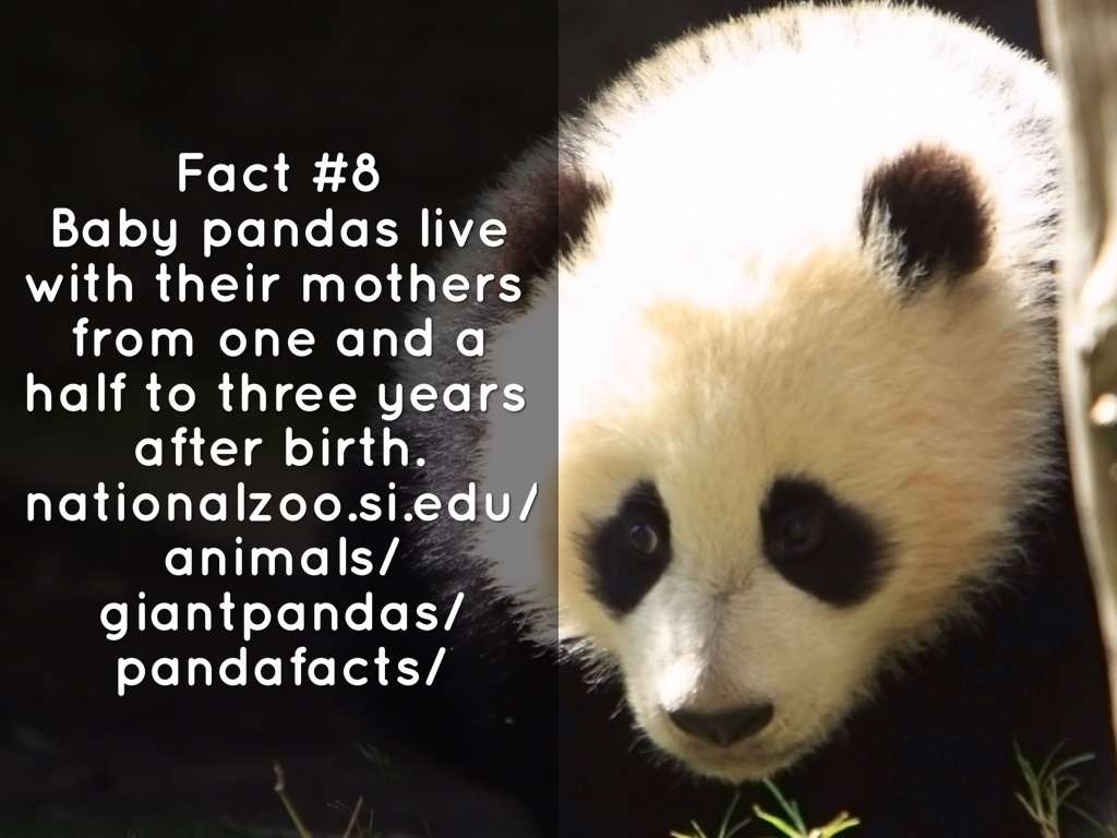 100 facts about pandas online dating 5