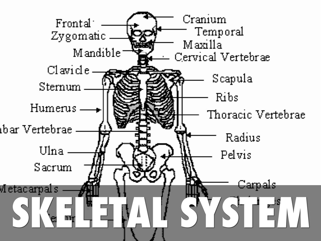 Skeletal By Almeda Barth