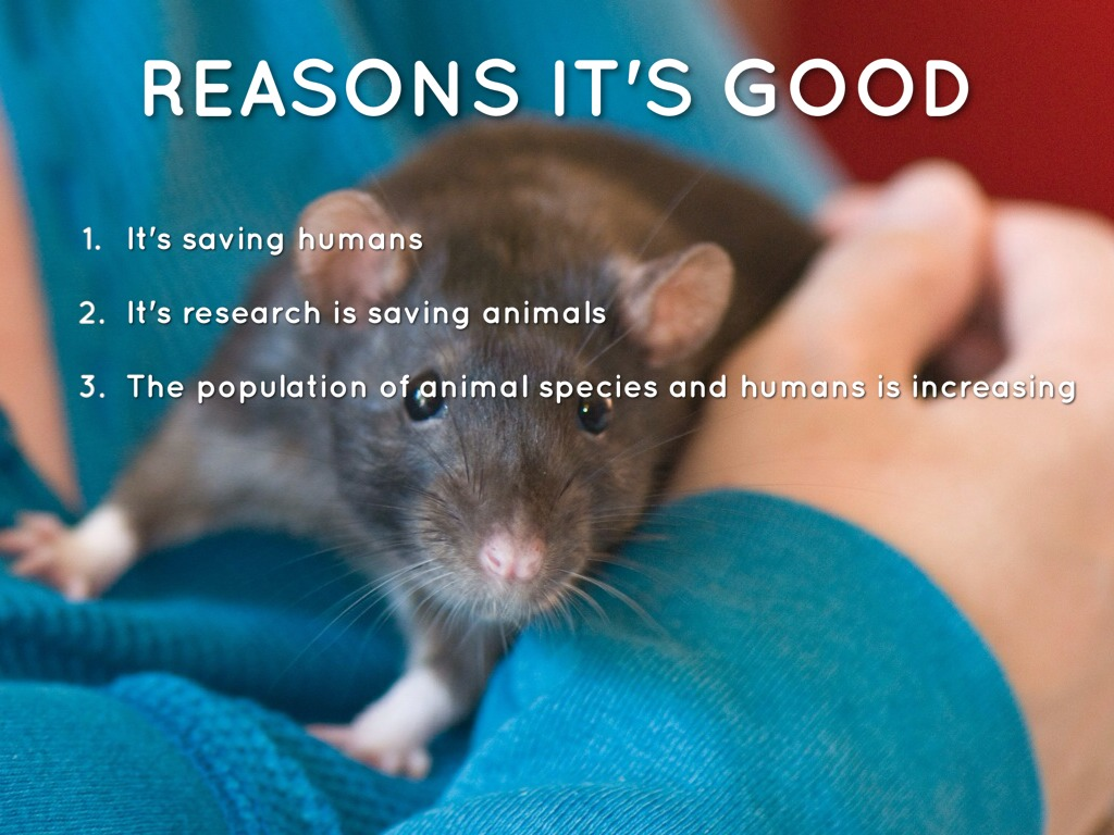 animal experimentation good or bad Most of those effects are bad – i'd casually estimate 99% of the time, anyway –  and many  for one thing, animal testing is quite expensive  as a supplement  to testing, in vitro wouldn't seem to be much good – you have to.