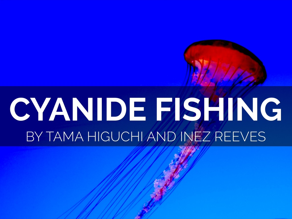 cyanide fishing Cyanide fishing is a method of collecting live fish mainly for use in aquariums, which involves spraying a sodium cyanide mixture into the desired fish's habitat in.