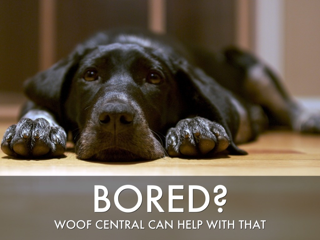 woof central by cynthia dahle