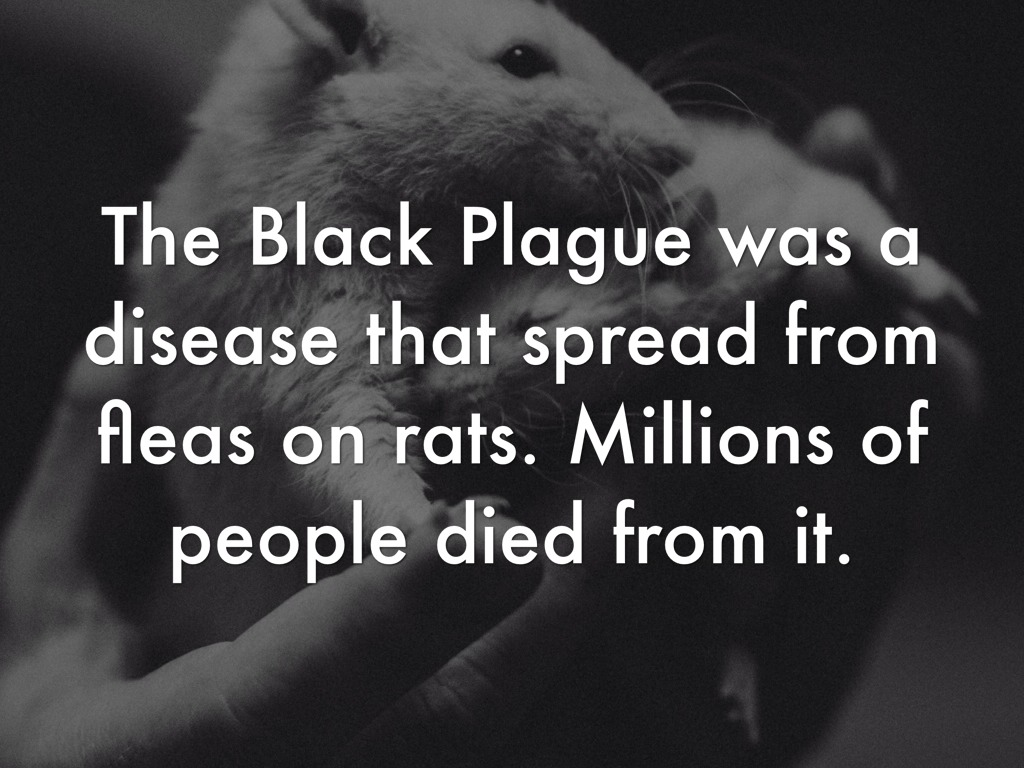 the role of the flea and the black rat in spreading the plague The last urban outbreak of rat-associated plague in the united states occurred in los angeles in 1924-1925 plague bacteria are most often transmitted by the bite of an infected flea during plague epizootics, many rodents die.