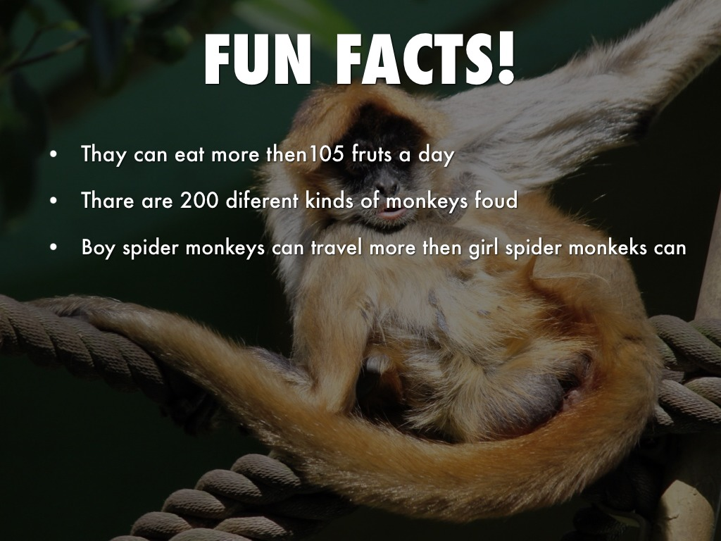 spider monkey research paper Spider monkey optimization algorithm for numerical optimization is proposed by modeling the foraging behavior of spider monkeys paper, we propose a novel.