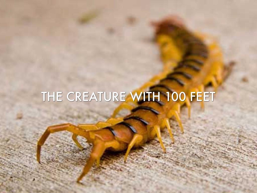 Summary -> Giant Centipede Bite - stargate-rasa info