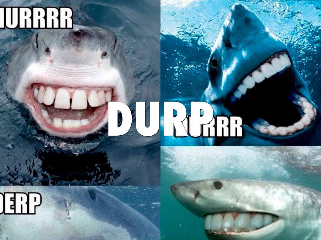 Real Shark Attacks - Hot Girls Wallpaper