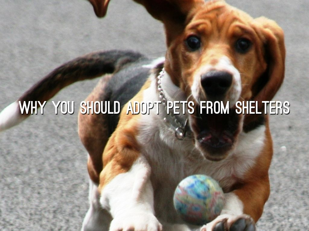 why you should adopt pets from shelters by sonya kapoor