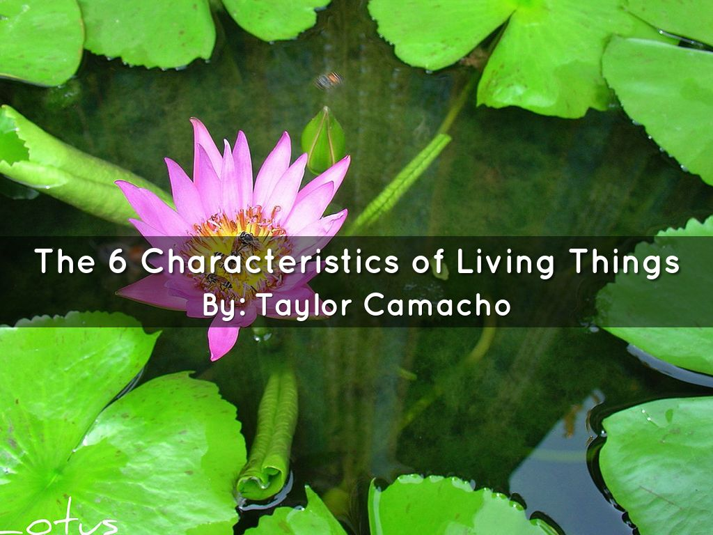 Copy of the 6 characteristics of living things by the 6 characteristics of living things izmirmasajfo