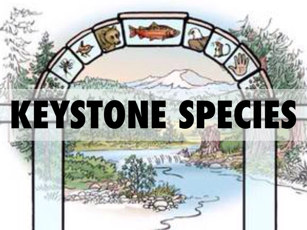 what is a keystone species Community structure can be strongly affected by keystone species.
