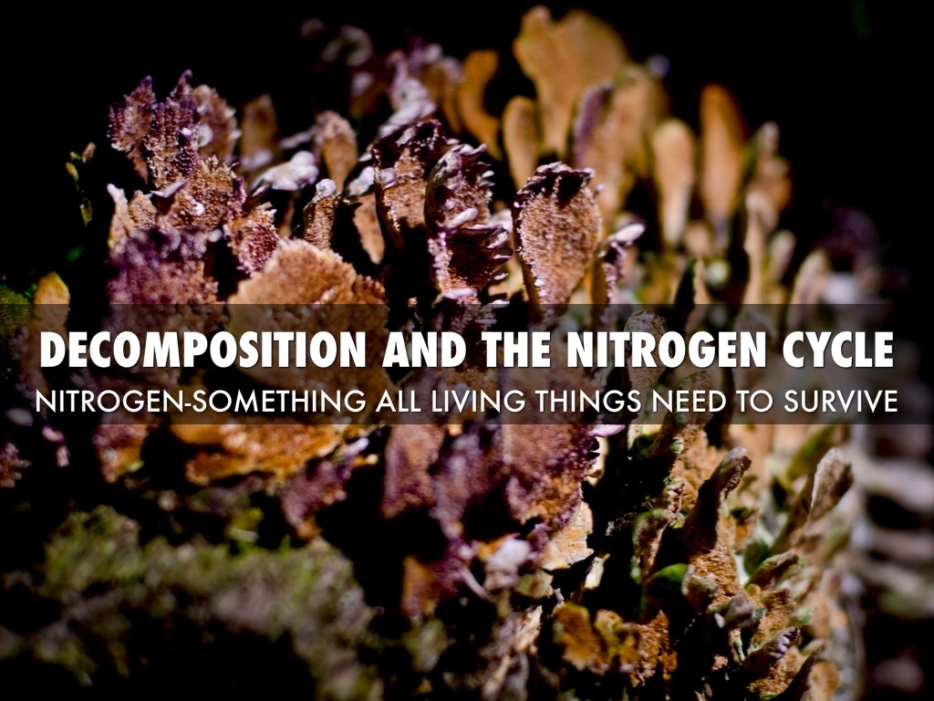 Decomposition And The Nitrogen Cycle